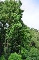 Восточная часть парка Нивки. Фото 8.jpg