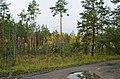 В лесу - panoramio (10).jpg