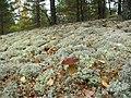 Грибные места на полигоне. (Fungal place at the landfill) - panoramio.jpg