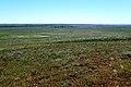 Донгузская степь с высоты 262 - panoramio.jpg
