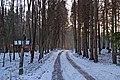 Дорога до лісництва у Воротневі.jpg