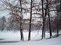 Зимой на Елагином острове.JPG