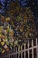 Кам'янець-Подільський ботанічний сад. Фото 2.jpg