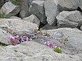 Квіти Алупкінський парк.jpg