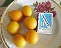 Кумкват (Citrus japonica) 02.jpg
