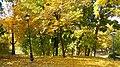 Маріїнський парк, осіння золота ковдра.JPG