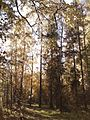 Осенний лес - panoramio (3).jpg