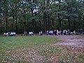 Пенсионеры в Тимирязевском парке - panoramio.jpg