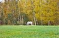 Пушкинские горы. Пейзаж с конем. Landscape with a horse. - panoramio.jpg