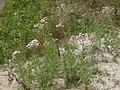 Растительность на склоне у р. Власиха, 2014.K5317.jpeg