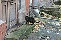 Санкт-Петербург, коты в СПбГМУ (7).jpg
