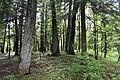 Трускавецький парк 25.jpg
