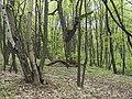Украина, Киев - Голосеевский лес 15.jpg