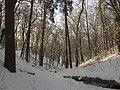 Украина, Киев - Голосеевский лес 158.jpg