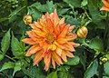 Цветы ботанического сада.jpg