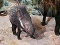 حیوانات تاکسی درمی شده - موزه تاریخ طبیعی شهر قم 14.jpg