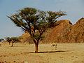 صحراء سيناء 1254.jpg