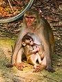 মধুপুর জাতীয় উদ্যানের প্রাণী.jpg