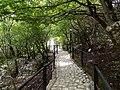 Მარტვილის კანიონის ბუნების ძეგლი სასეირნო ბილიკი.jpg