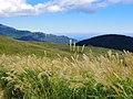 ススキの黄金の野 (The golden field at Hosono Plateau) Oct 19, 2012 - panoramio.jpg