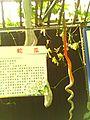 农科所 - panoramio - parodyfang.jpg