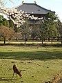 大仏殿後ろ姿と子鹿 - panoramio.jpg