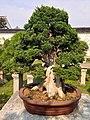 拙政園 - panoramio (46).jpg