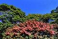 浜離宮 - panoramio.jpg