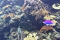 海生館 Museum of Marine Biology - panoramio (1).jpg
