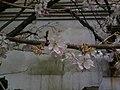 香川県善通寺市善通寺 - panoramio (12).jpg