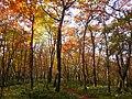 한라산의 가을 둘레길1.jpg