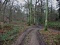. Footpath junction in High Wood - geograph.org.uk - 106256.jpg