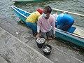 0016Hagonoy Fish Port River Bancas Birds 18.jpg