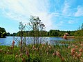 0025. Pargolovo. Finnish lake.jpg