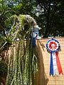 05525jfMidyear Philippine Orchid Show Circle Quezon Cityfvf 13.JPG