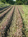 0581jfLandscapes Roads Vegetables Fields Binagbag Angat Bulacanfvf 17.JPG