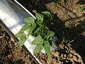 09656jfSan Rafael Bulacan Chapel Diliman Paddy Vegetable Fields Roadsfvf 26.JPG