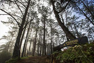 Huai Nam Dang National Park - Hill pine camp