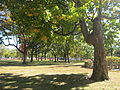 1510-Cambridge Common 079.jpg