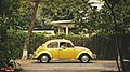 1967 Volkswagen Beetle, Bangladesh. (40206594420).jpg