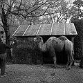 20.11.1961. Animaux au jardin des plantes. (1961) - 53Fi3072.jpg