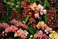 2010 Pacific Orchid Expo 06.jpg