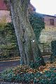 2012-10 Siddinghausen 8-Linden-Kirchhof 04.jpg