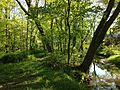 2013-05-04 16 52 47 View down the West Branch Shabakunk Creek in the wooded area near where Terrace Blvd intersects Dunmore Avenue.jpg