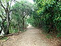 20140421 Ilha Grande (2).jpg