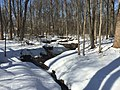 2016-01-31 13 22 23 A tributary of Hosepen Run in a snowy woodland eight days after the Blizzard of 2016 in the Franklin Farm section of Oak Hill, Fairfax County, Virginia.jpg