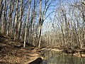 2016-02-08 13 35 31 View north along the Gerry Connolly Cross County Trail and down Difficult Run between Vale Road and Lawyers Road in Oakton, Fairfax County, Virginia.jpg