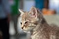 2016-06-25 Wikimania, Cat (freddy2001) (06).jpg