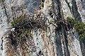 2016 Prowincja Krabi, Ko Ma (01).jpg