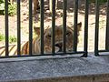 2017 Vienna zoo 19.jpg
